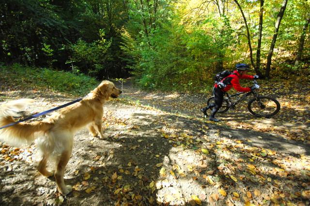 pes versus cyklista
