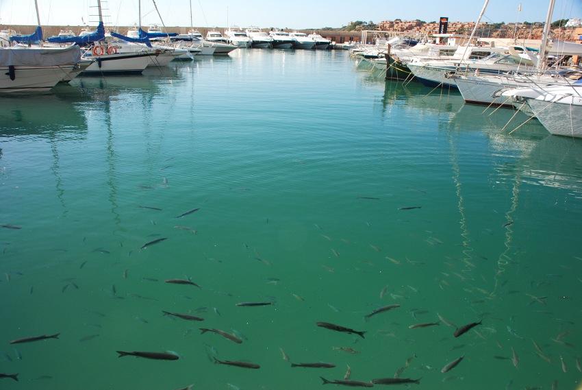 Merida Camp 2008, Mallorca - rybičky v přístavu
