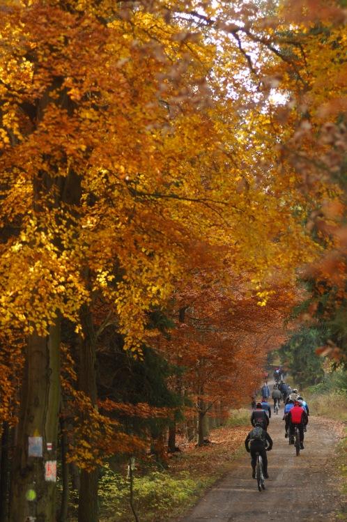 Winter Trans Brdy 2009 - doznívající podzim