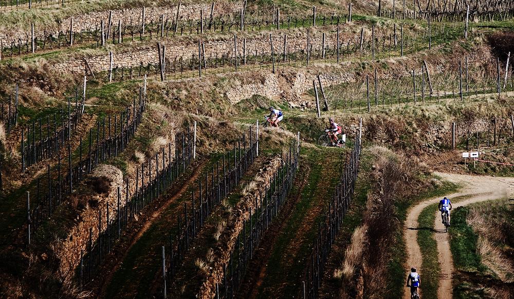 Kamptal Klassik Trophy 2010: vinice na druhé straně kopce