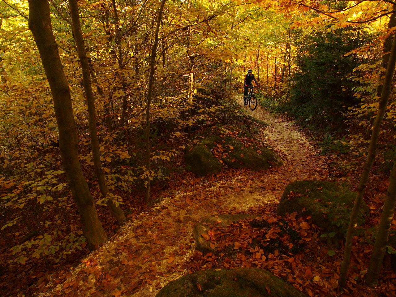 Rychleby - podzim 2015 s Rowanem Sorrellem