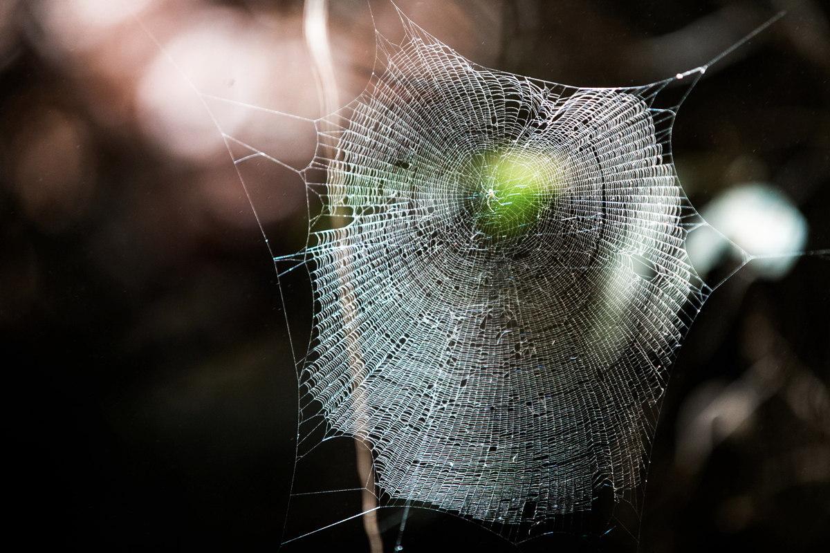Sever Austrálie není nic pro arachnofobiky