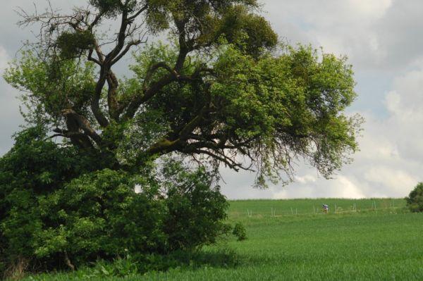 Mistrovstv� Evropy 2008 St. Wendel (GER) - �tafety