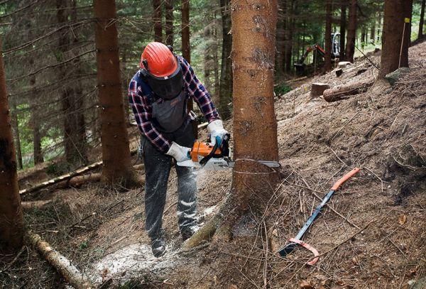 ČeMBA Singltrek pod Smrkem 2009 - některé stromy u budoucí stezky zůstanou, jiné musejí být pokáceny...