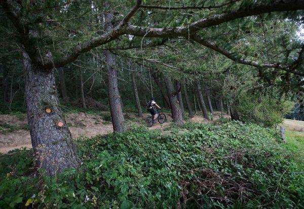 ČeMBA Singltrek pod Smrkem 2009 - úsek trailu od Obřího sudu k chatě Hubertka