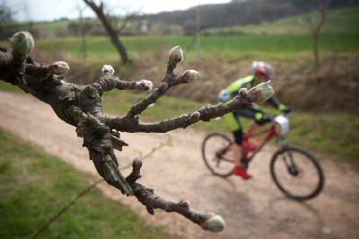 začínající jaro