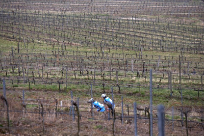 Ve vinicích