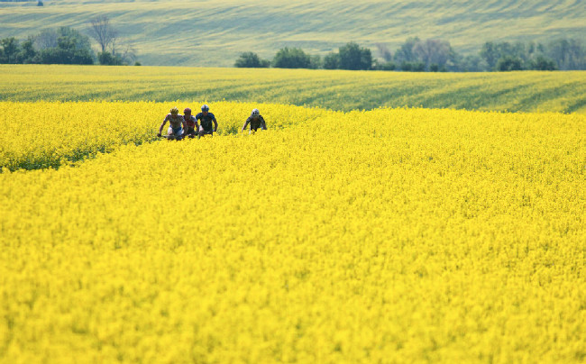 Žluté kulisy