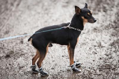 Každý správný fanoušek cyklokrosu ví, že pořádné boty jsou třeba