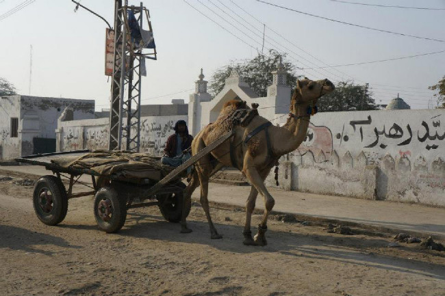 né každý má auto, převládá živočišný pohon