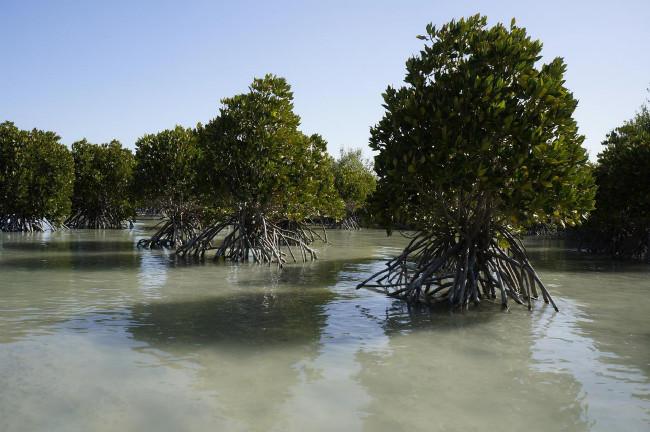 Národní park Mangrovy