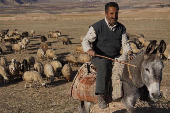 Pastevci tu používají oslíky