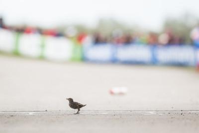 Vogel první v cíli