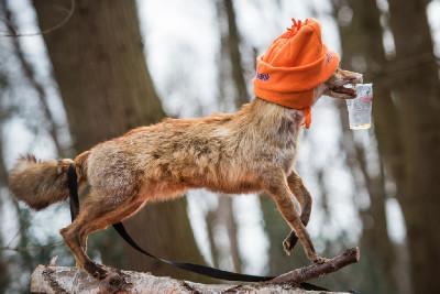 fandit přišla i liška