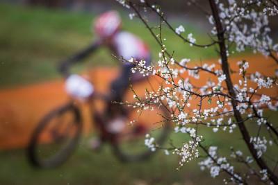 náznaky jara