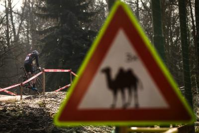 Místní trojhrbý velbloud letos nekousal