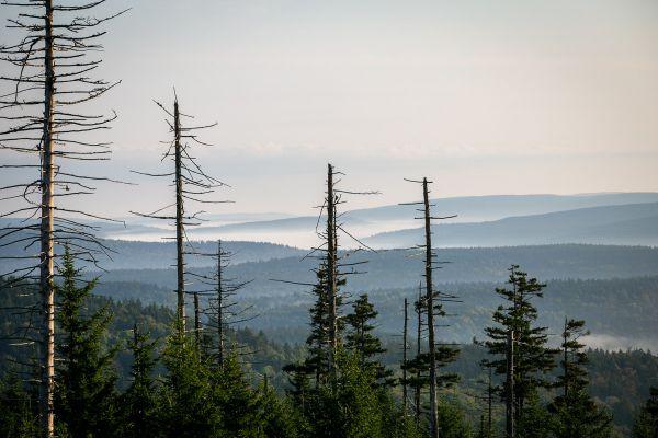 SP Snowshoe 2019 - nedělní ráno v Apalačských horách