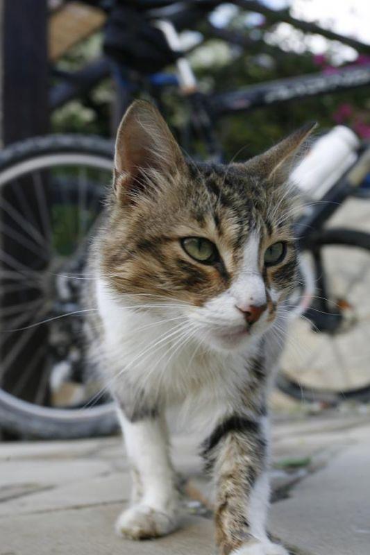 Kypr 4.-5.11.2006 - Kypr je plný koček