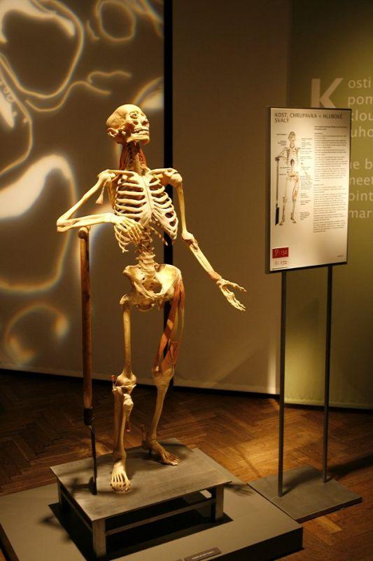 Výstava Bodies 2007 - Lucerna Praha